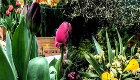 flower show 2018 feature image