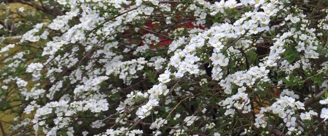 garden blog image