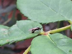 sawfly sitting